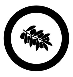 Olive branch black icon in circle vector