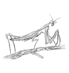 Grasshopper sitting on tree side view vector