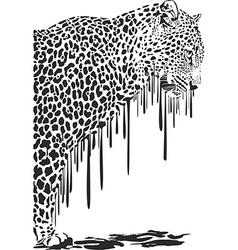 Leopard abstract painting on a white background vector image