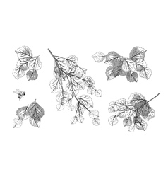 Tree branch leaves set vector