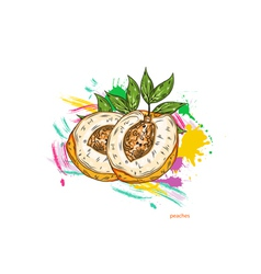 peaches with colorful splashes vector image