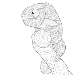 Adult coloring bookpage a cute cameleon vector