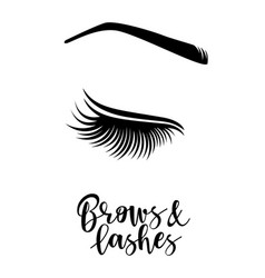 brows and lashes vector image