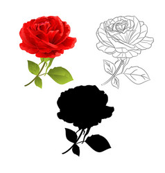 flower red rose natural and outline vector image