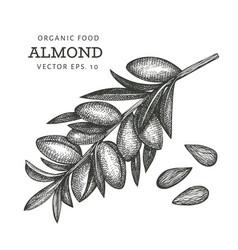 hand drawn sketch almond branch organic food vector image