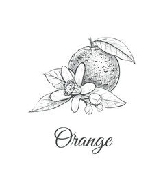 orange sketch with flower orange vector image