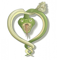 snake love vector image