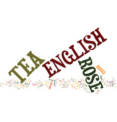 the english tea rose text background word cloud vector image