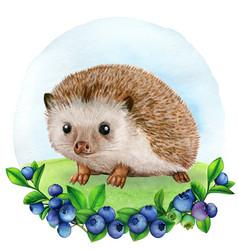 cute watercolor hedgehog vector image
