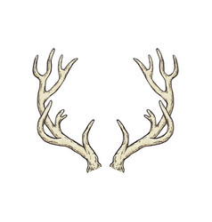 Deer antlers drawing isolated on white background vector