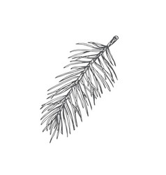 Hand drawn christmas pine branch fir-needle twig vector