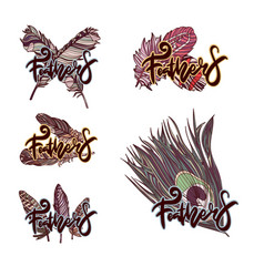 design of logos with feathers vector image
