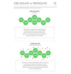 Cbd isolate vs terpsolate vertical business vector