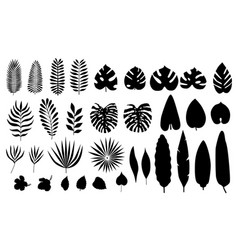 set of silhouette tropical leaves flowers vector image