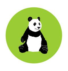 sitting panda bear isolated vector image