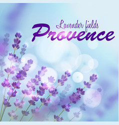 lavender background provence fields vector image