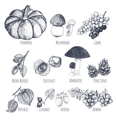 Autumn fruits hand drawn sketches vector