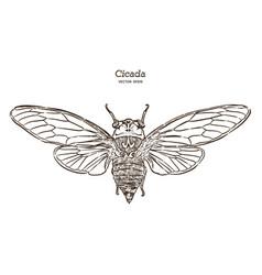 cicada hand draw sketch vector image