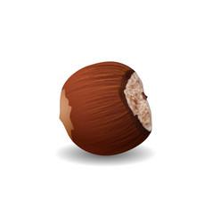 Hazelnut isolated on a white background vector