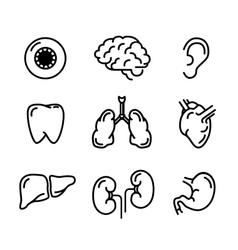 Set of black outline icons of humans organs on vector image