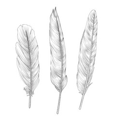 Feather sign isolated set different birds doodle vector