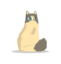 funny beige puffy cat with gray markings on head vector image