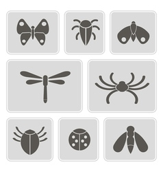 monochrome icons with various insects vector image vector image