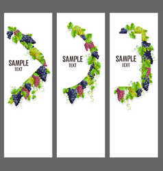 set of banners with bunches of grapes vector image