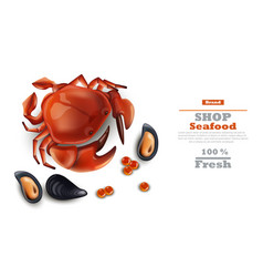 crab and mussels realistic on white vector image