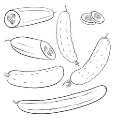 Drawing cucumbers vector