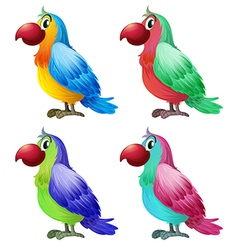 Four colorful parrots vector image vector image