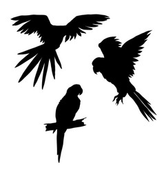 set of parrots flying vector image vector image