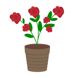 growing plant with flower vector image