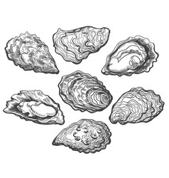 oyster shell set vector image