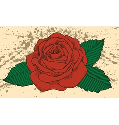 Rose tattoo on old background with blots vector