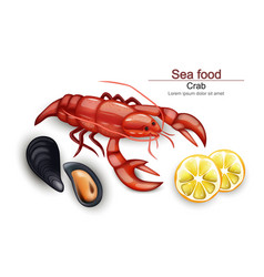Seafood cancer and mussels realistic on vector