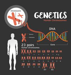 genetics dna structure vector image vector image