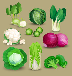 Vegetable set with cabbages vector
