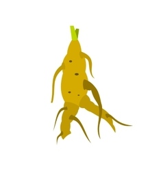 Ginseng rot icon flat style vector