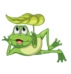 green frog and leaf vector image