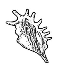 Sea shell black engraving vintage vector