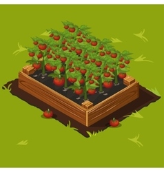 Vegetable Garden Box with Tomatoes Set 4 vector