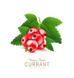 currant3 vs vector image vector image