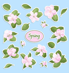 A set stickers with spring apple blossom vector
