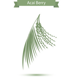 Acai palm leaves and acai berries vector image