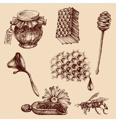 Honey and apiculture set Bee icons collection vector
