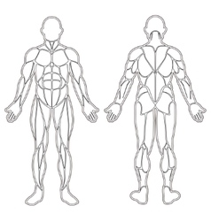 Human body muscles silhouette vector