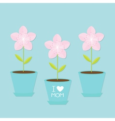 Sakura flower pot set Japan blooming cherry vector