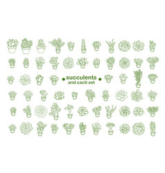 set of and drawn line succulent plant isolated on vector image