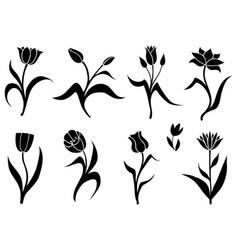 silhouette set decorative tulips vector image